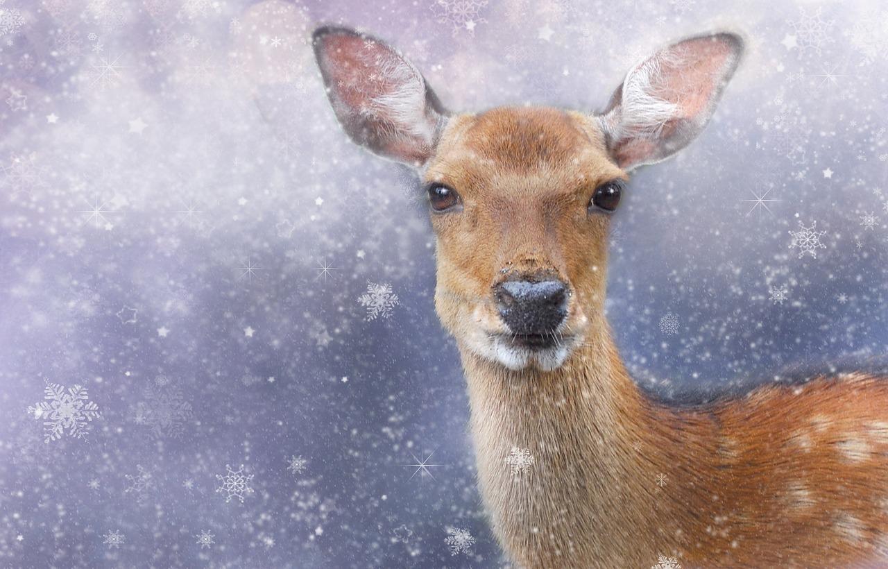 Открытки с Рождеством: подборка рождественских открыток