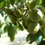Фермер Белгородской области Олег Батрак: крепкий орешек